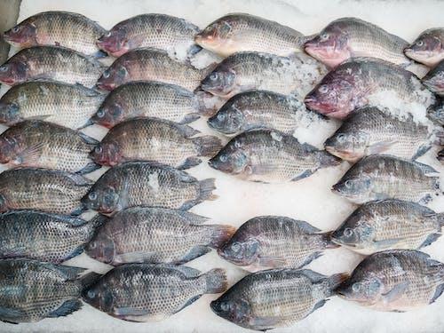Základová fotografie zdarma na téma čerstvý, kapr, plody moře