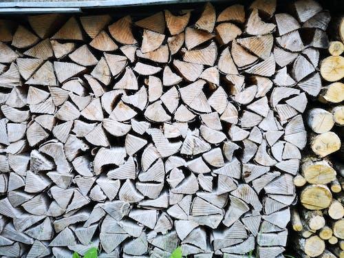 Kostenloses Stock Foto zu arbeit, bäume, brennholz