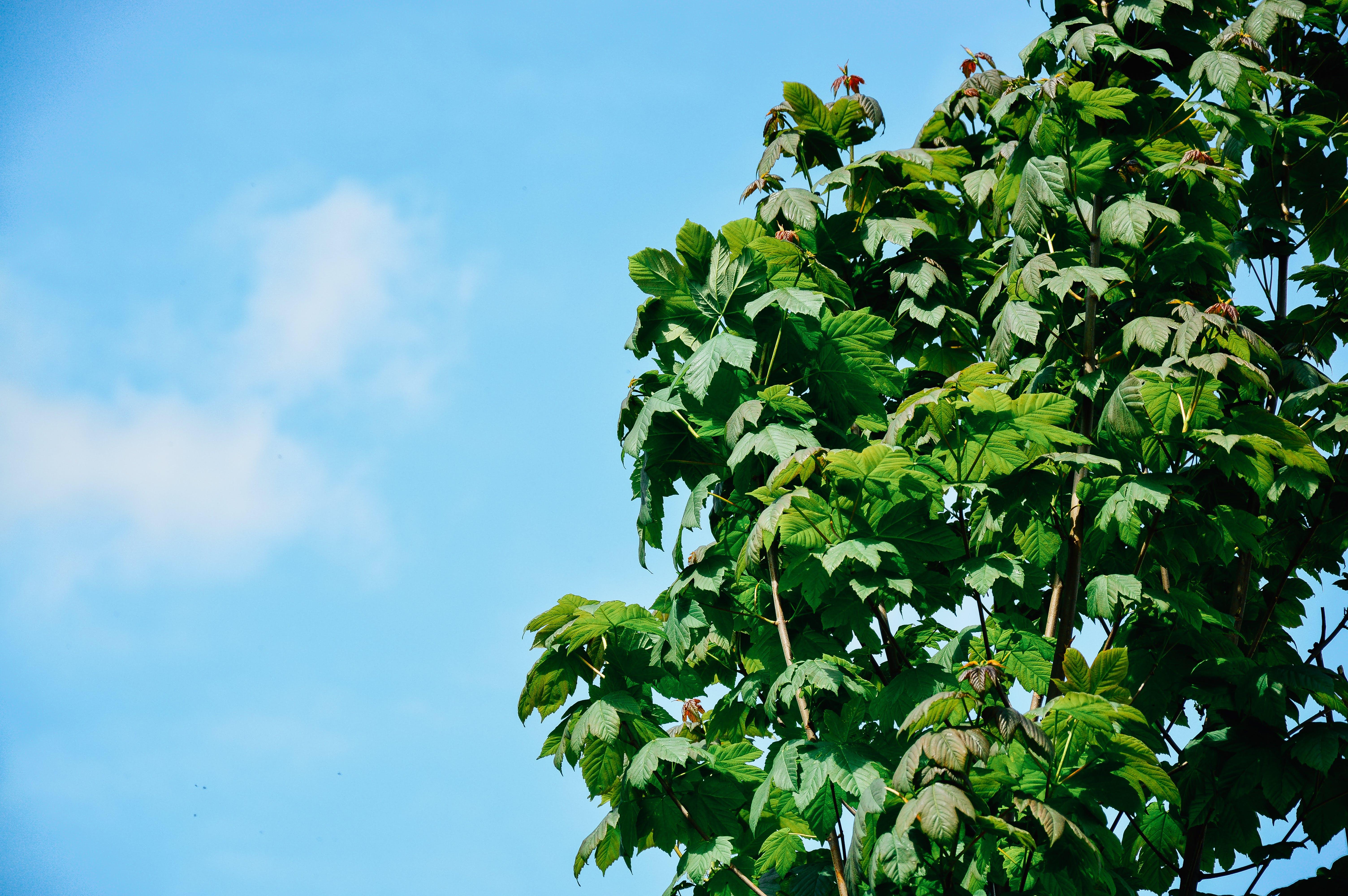 Free stock photo of sky, tree