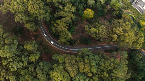 Aerial View of Green Trees and Road