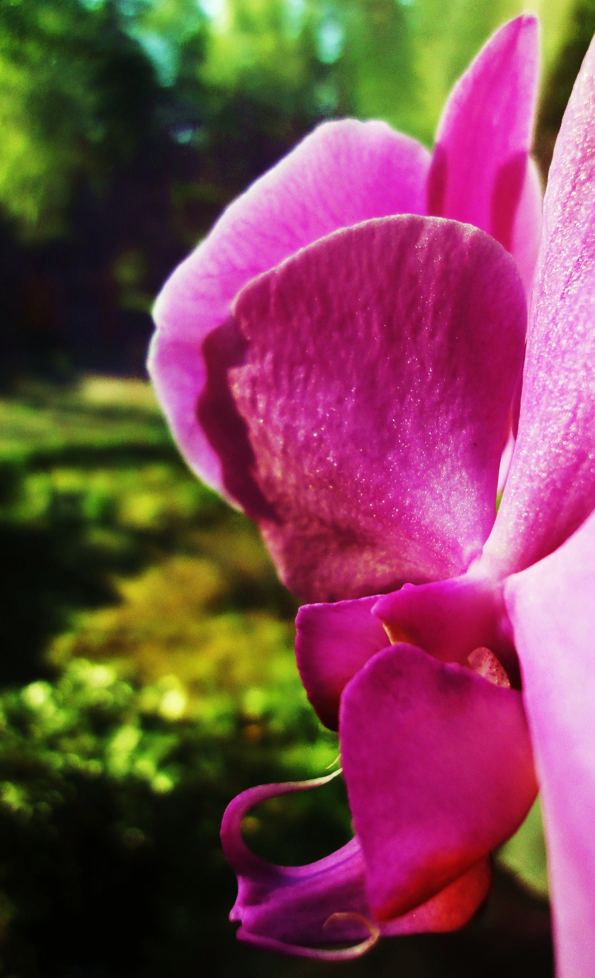 Free stock photo of sun, flower, green, orchid