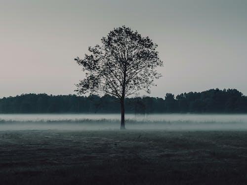 天性, 性質, 有霧, 森林 的 免費圖庫相片