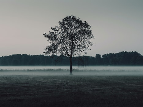 Free stock photo of nature, dark, forest, fog