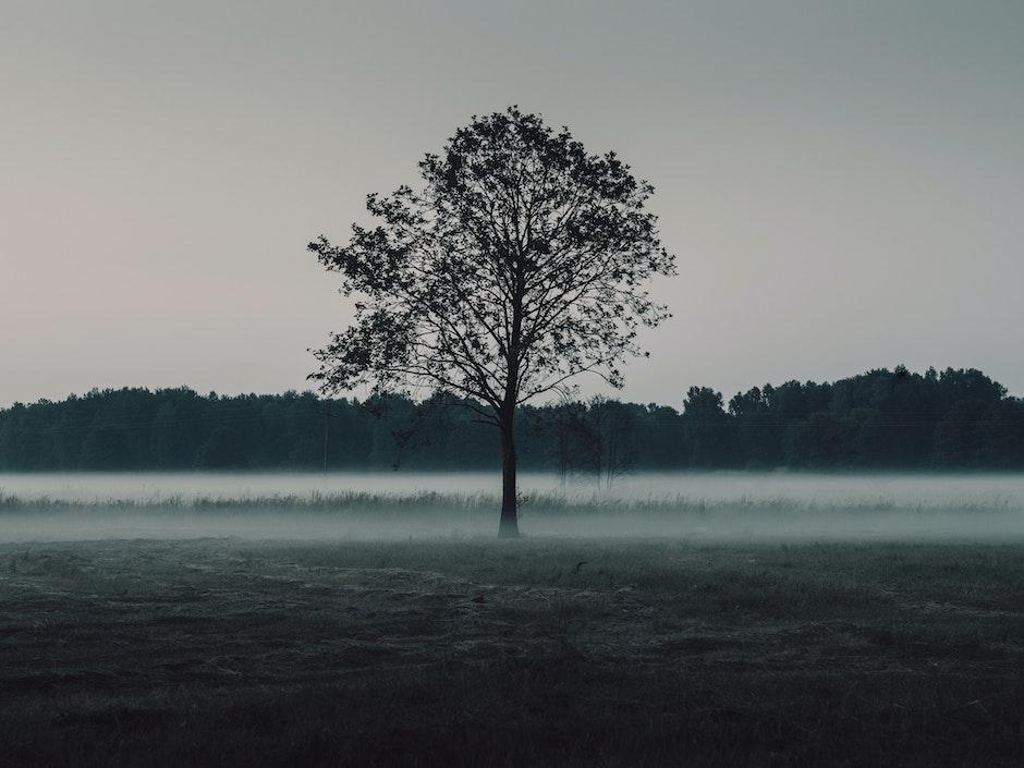 dark, fog, foggy