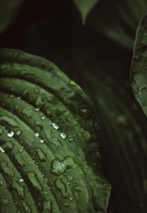 Immagine gratuita di bagnato, foglie, gocce d'acqua
