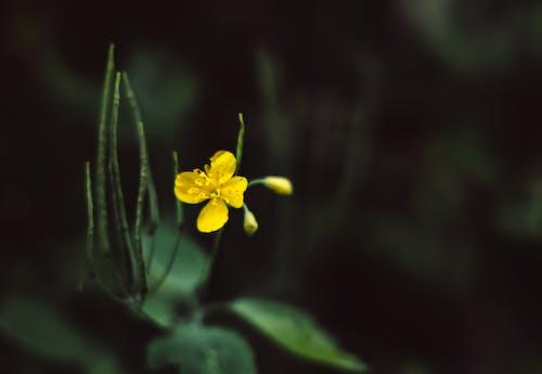 Бесплатное стоковое фото с глубина резкости, желтый цветок, крупный план