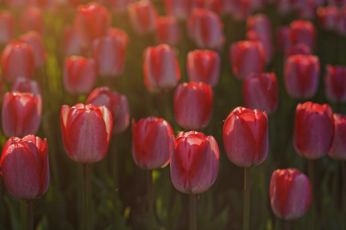 cánh hoa, hệ thực vật, hoa