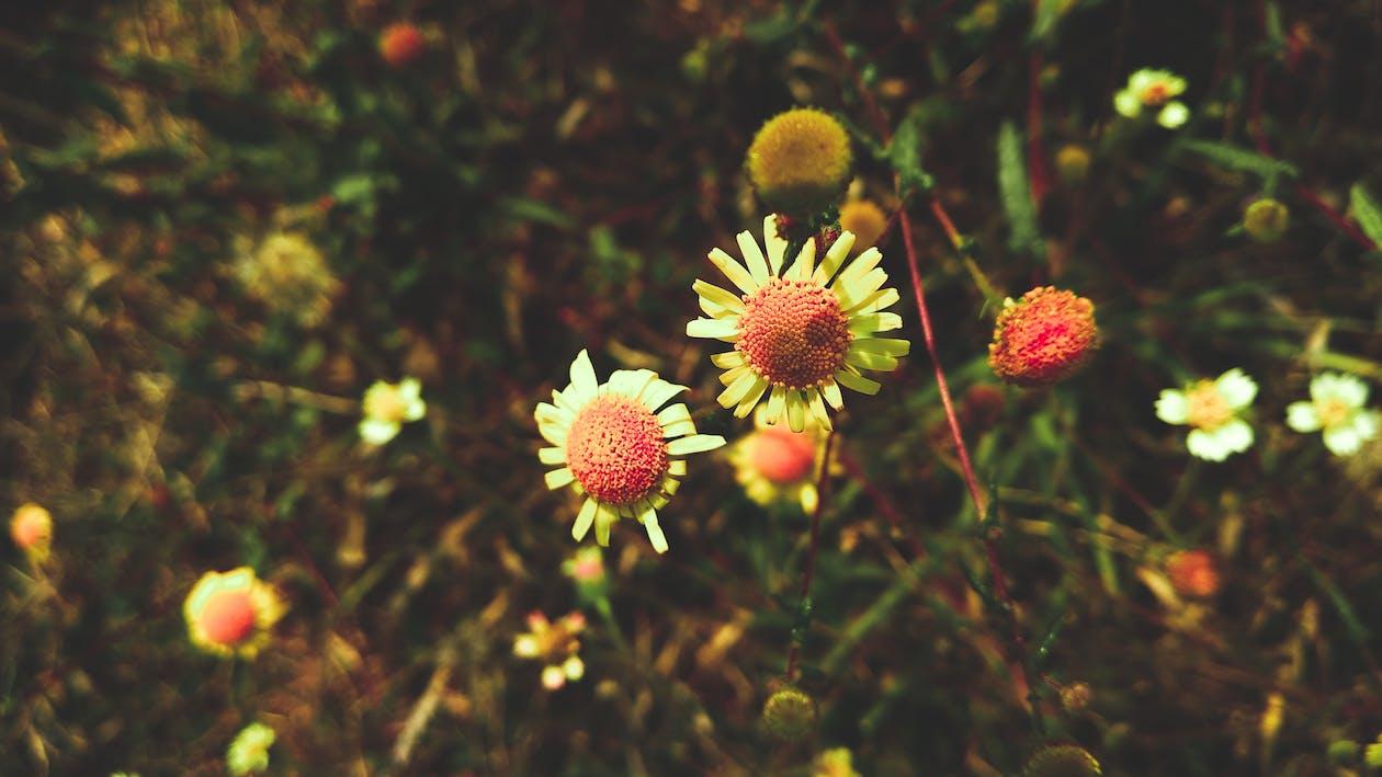 barvy, botanický, flóra