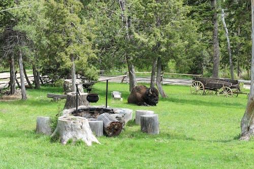 Brown Cut Log on Green Grass Field