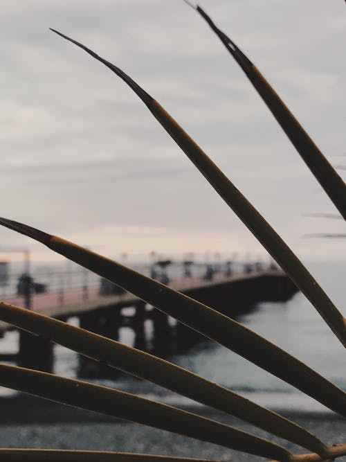 Free stock photo of palm leaf, palm leaves, pier
