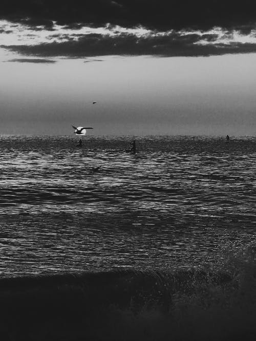 Grayscale Photo of Bird Flying over the Sea