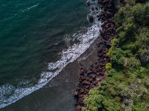 Photos gratuites de arbre, baie, bord de mer