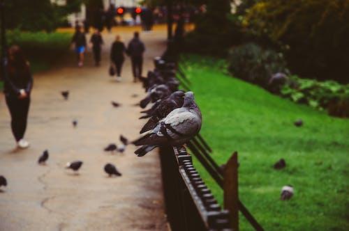Základová fotografie zdarma na téma holubi, lidé, makro, park