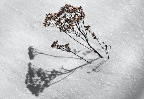 Fotos de stock gratuitas de cubierto de nieve, hielo, invierno