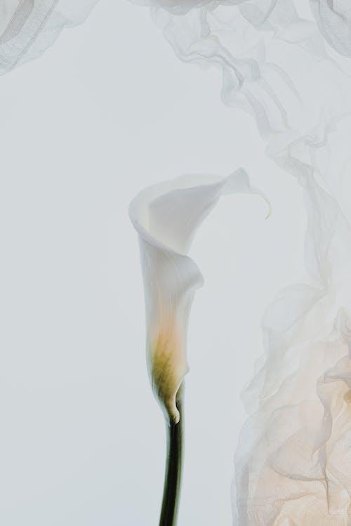 관념적인, 그래픽 디자인, 꽃의 무료 스톡 사진
