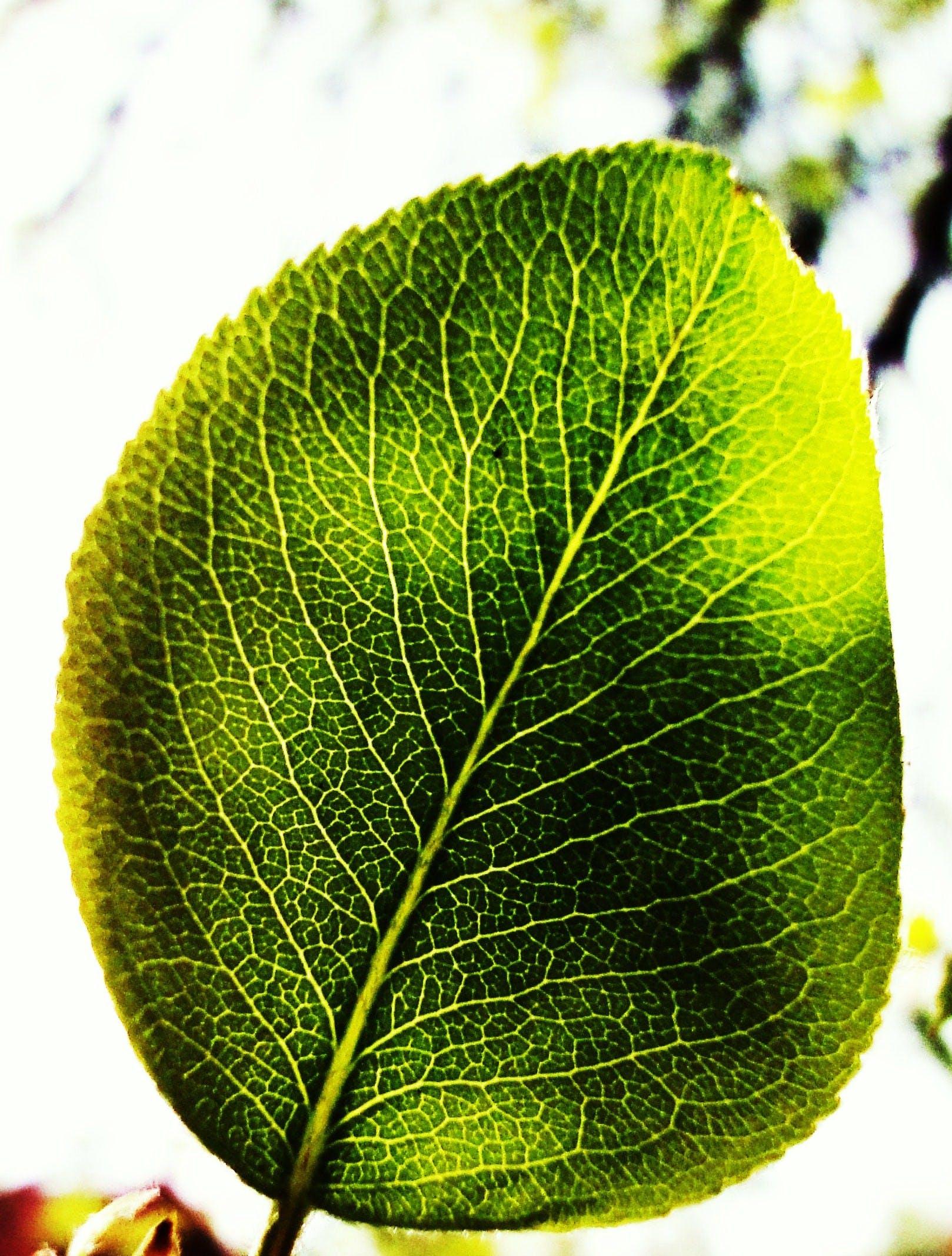 Free stock photo of sun, leaf, green