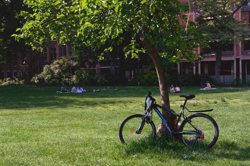 Blue and Black Bicycle on Green Grass Field Near Green Trees