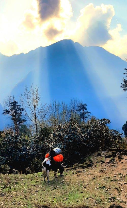 Free stock photo of beautiful, mountain background, nature background