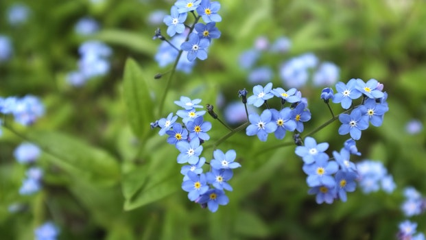 Free stock photo of night, forget me-not, colney