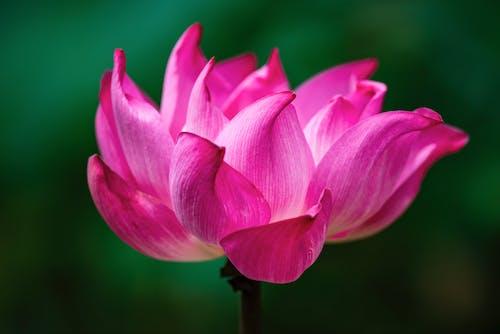 Foto d'estoc gratuïta de flor, flora, florint