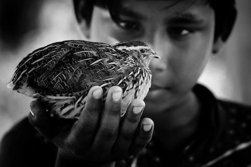 Ilmainen kuvapankkikuva tunnisteilla aasialainen poika, eläimen muotokuva, mustavalkoinen