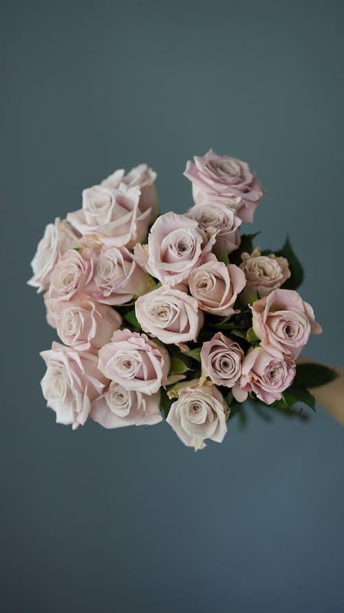 Beautiful Roses in Bloom