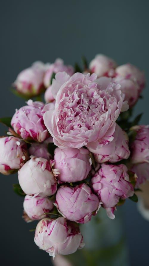 Kostnadsfri bild av blomfotografi, blommar, blommor