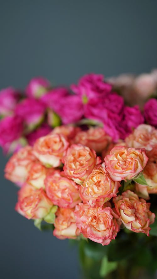 Clusters of Beautiful Flowers