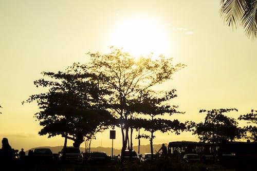 Kostnadsfri bild av bilar, dagsljus, guld, gyllene sol