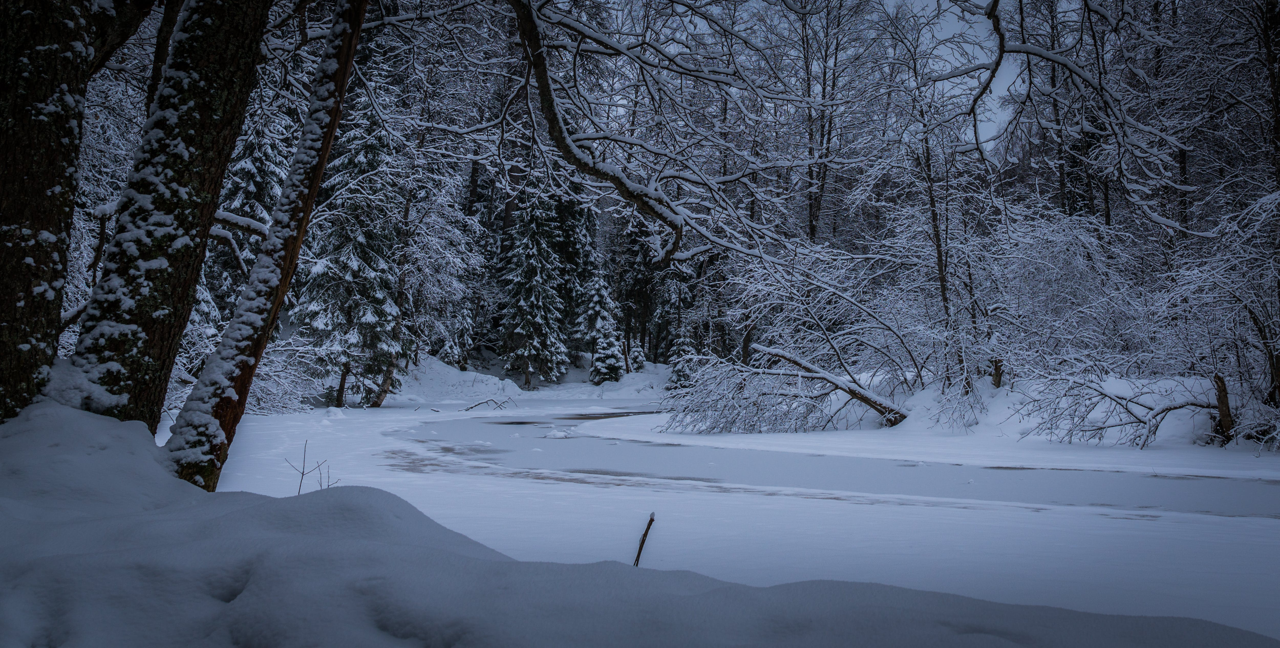 Free stock photo of forest, ice, river, snow