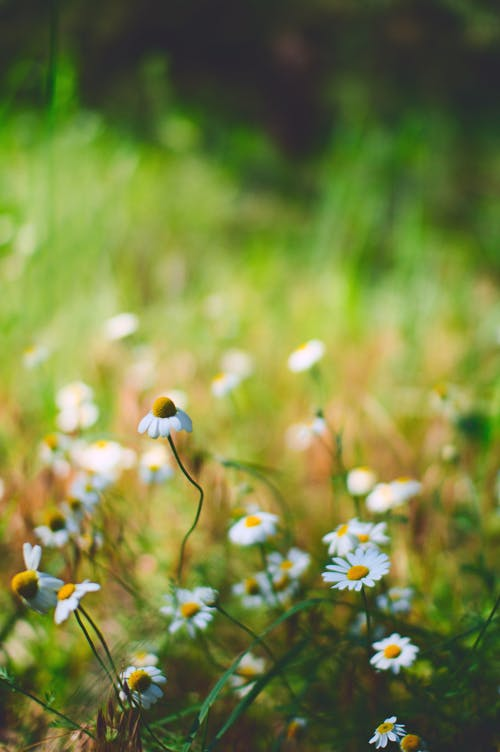 Yellow and White Flower on Green Grass