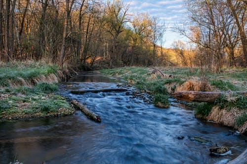 Ilmainen kuvapankkikuva tunnisteilla aamu, aamunkoitto, joki
