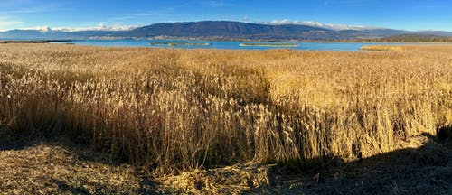 Безкоштовне стокове фото на тему «lago, reserva, обсерваторія»