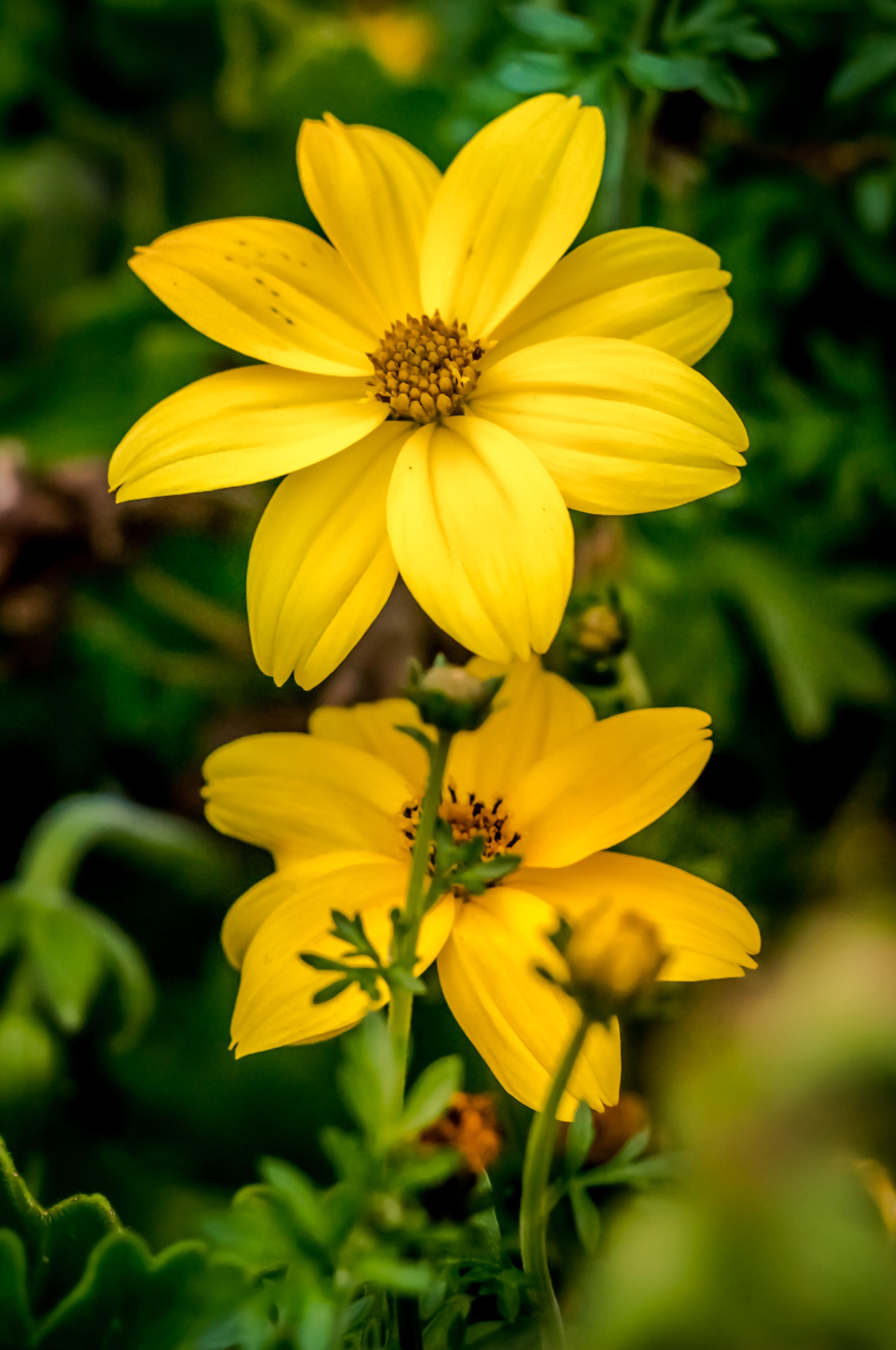 closeup, flowers, nature