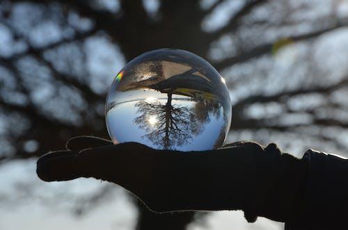 Безкоштовне стокове фото на тему «esfera, reflejo, vegetación, мано»