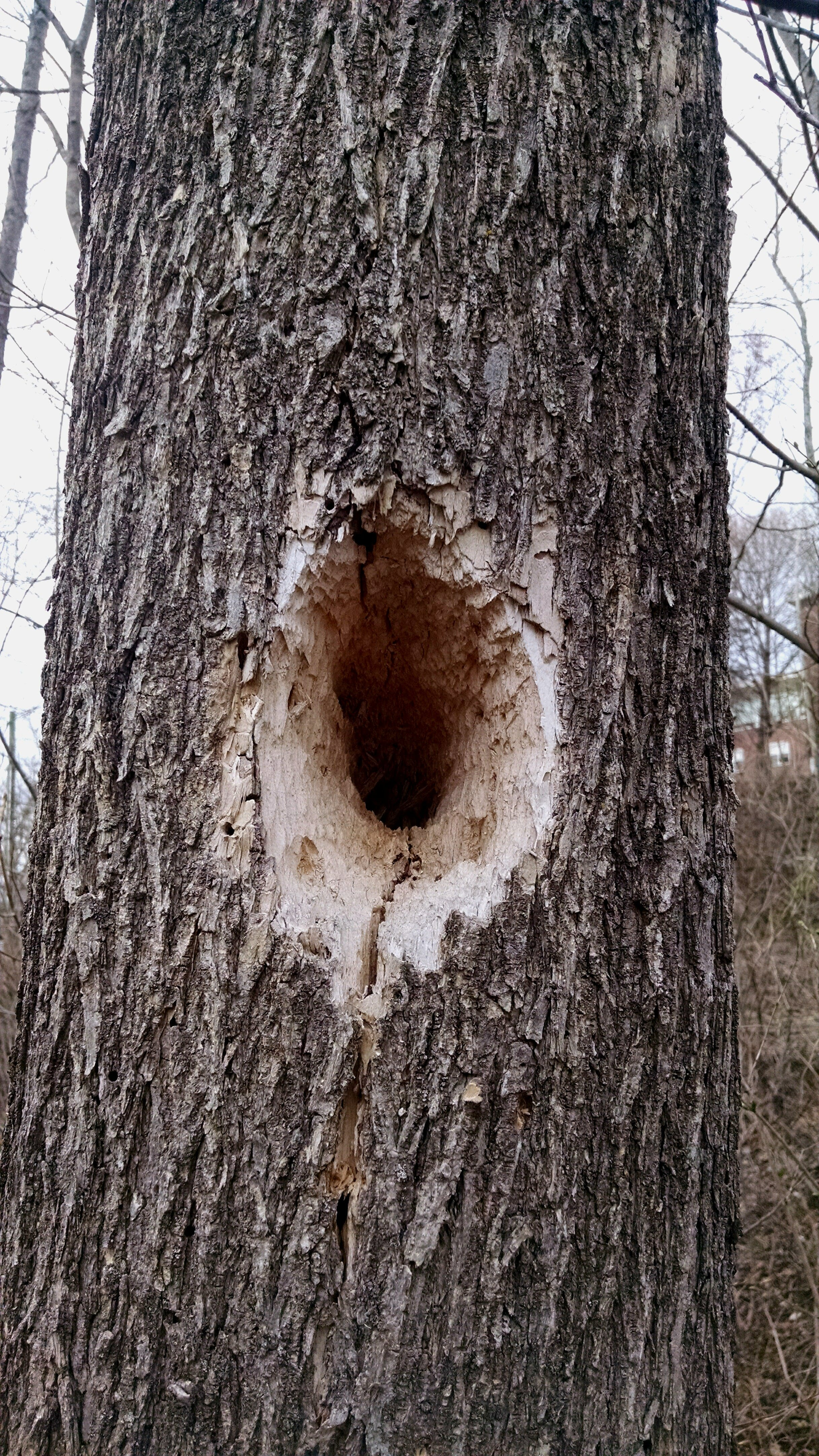 Free stock photo of hole, nature, tree