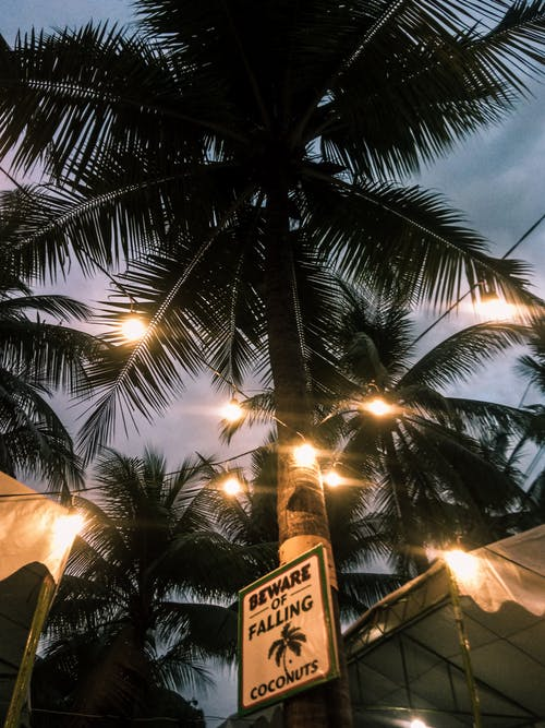 Coconut Trees with Yellow Light