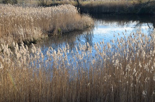 Безкоштовне стокове фото на тему «ã¡gua, estanque, reflejos, vegetación»