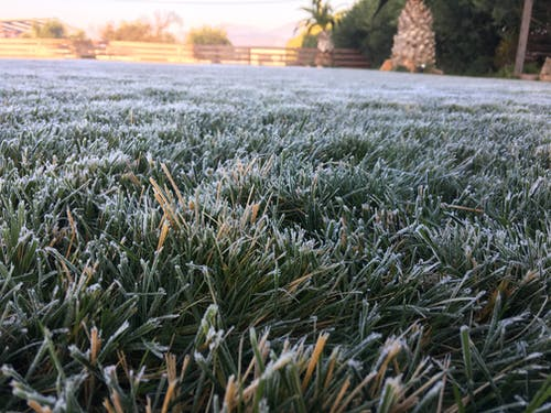 Free stock photo of freeze lawn, hoar frost
