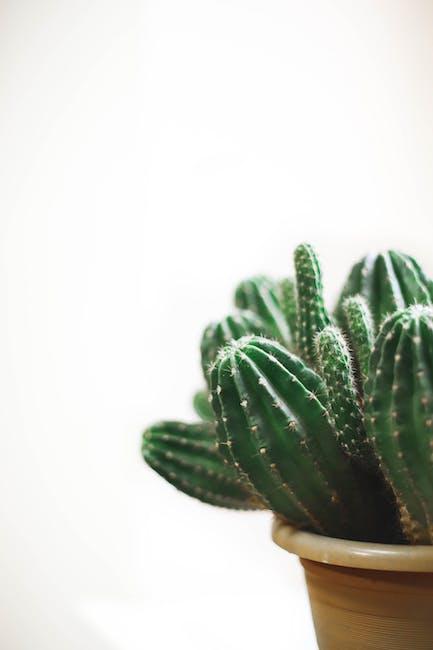 Closeup photo of cactus plant in a pot