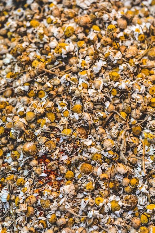 건조한, 계절, 꽃, 노란색의 무료 스톡 사진