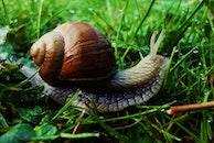 animal, snail, shell