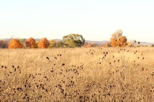 Free stock photo of fall foliage, grass field, open field, trees