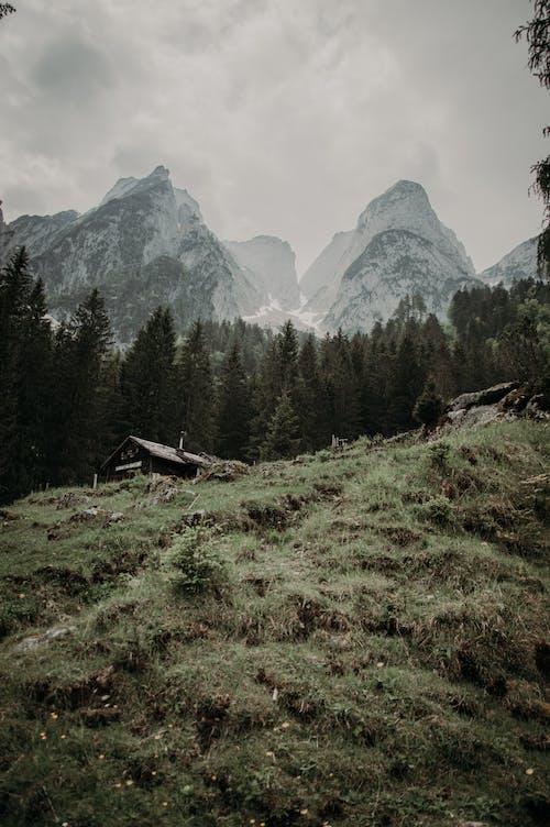 Free stock photo of conifer, daylight, environment