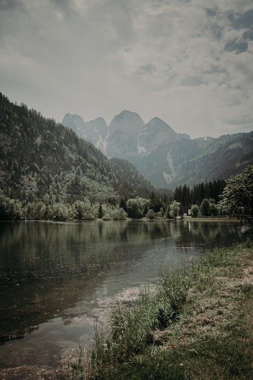 Free stock photo of fog, grass, lake