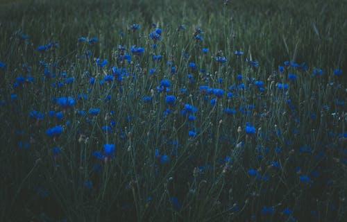 Photo of Blue Petaled Flowers