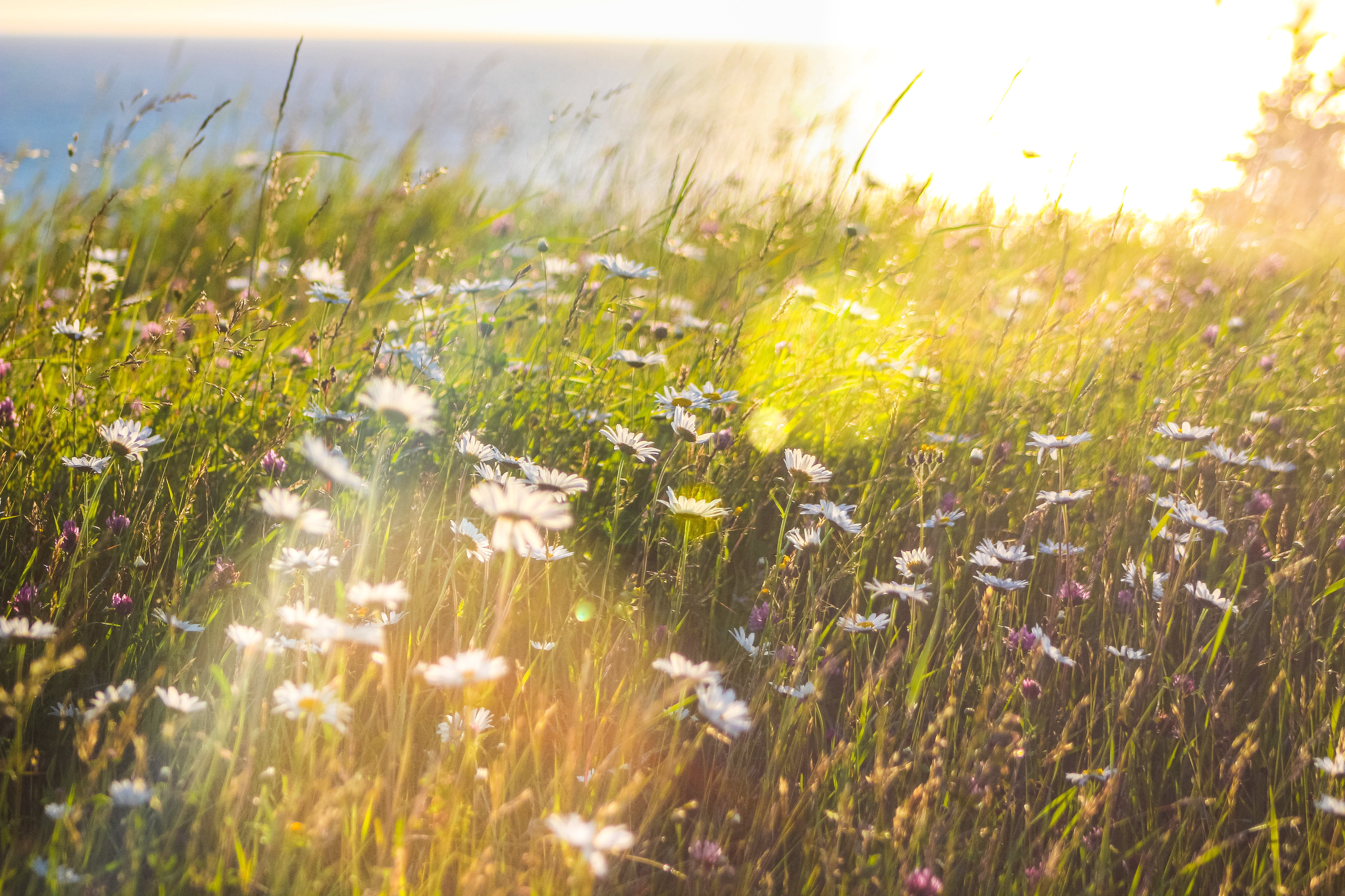 Fotos de stock gratuitas de campo, césped, durante el día, flora