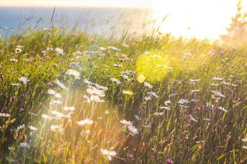 Ingyenes stockfotó fű, legelő, mező, napos témában