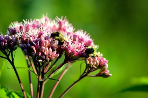 Ilmainen kuvapankkikuva tunnisteilla hyönteinen, kasvikunta, kasvu, kaunis