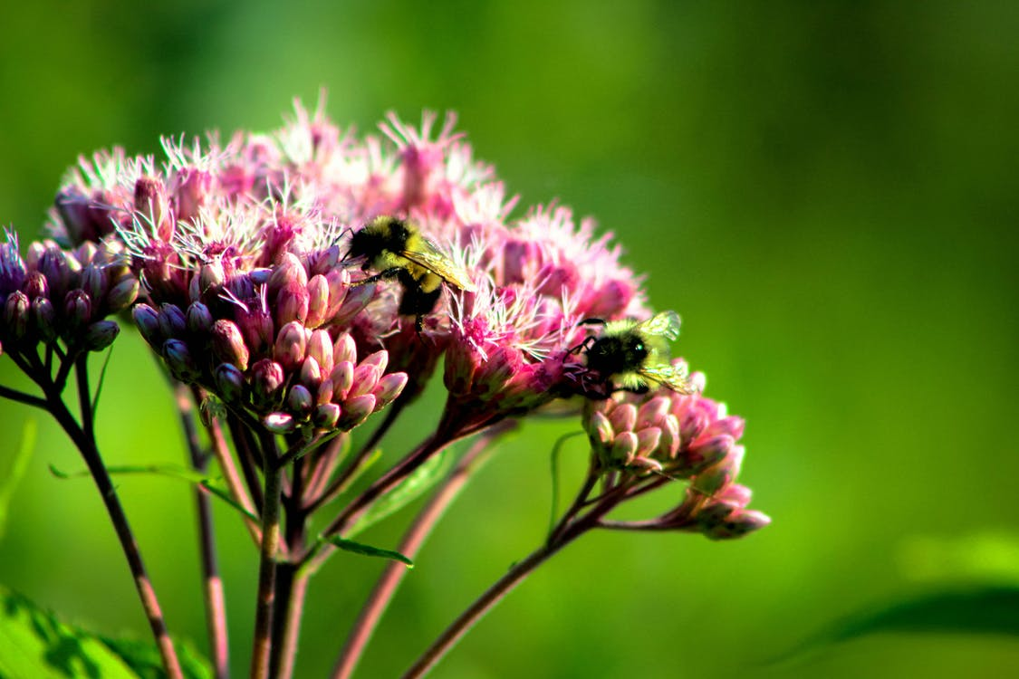 dziki, flora, jasny